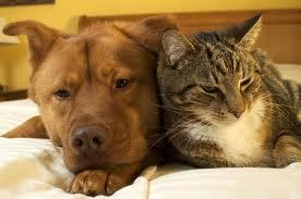 nos animaux domestiques préférés